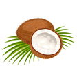 coconut leaves vector image
