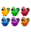 A group of angry birds vector image vector image