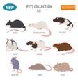 rat breeds icon set flat style isolated on white vector image