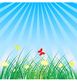summer spring nature background grass butterflies vector image vector image