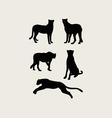 Cheetah Silhouettes vector image