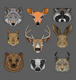 head of wild animals set portrait of wolf doe vector image