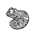 chameleon with doodle pattern coloring book vector image