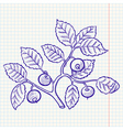 bilberry vector image