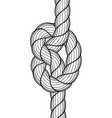 rope knot icon vector image