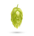 hop plant 3d icon isolated on white vector image