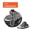 Pemagranate vector image