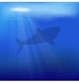 underwater scene with shark vector image