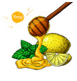 honey with lemon and mint drawing wooden vector image