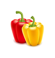 Sweet pepper isolated on white vector image