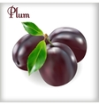 Ripe plums with stem vector image