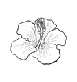 Single bright red hibiscus tropical flower sketch vector image