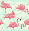 flamingo bird and tropical palm vector image vector image