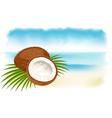 ripe coconuts vector image vector image