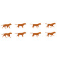 red dog set icons with fast running animals vector image