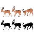 Cute cartoon antelope vector image