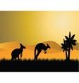 kangaroo sunset vector image