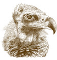engraving of cinereous vulture vector image