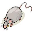 rat cartoon character vector image