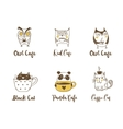 Cute owls cat and panda drinking coffee vector image vector image