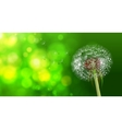 Dandelion on blurred green bokeh background vector image vector image