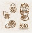 digital detailed line art cooked egg vector image