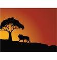lion silhouette vector image