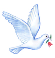 Watercolor soaring dove vector image vector image