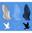 Dove bird wings set vector image vector image