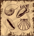 Sea shells collection on vintage background vector image vector image