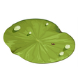 lotus leaf vector image
