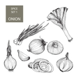Onion Set of vector image