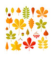 autumn leaf set isolated on white background vector image