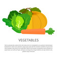 vegetables poster with pumpkin cabbage and carrot vector image