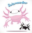 Salamander 3 vector image
