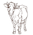 cute naturalistic cow vector image