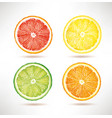 lime lemon orange grapefruit slices vector image