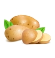 Potatoes with slices and leaves vector image vector image