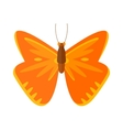 Colored cartoon Cabbage butterfly isolated vector image
