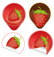 red ripe strawberry with leaves vector image vector image