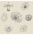 Set of seven graphic flowers vector image