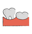 healthy human teeths vector image