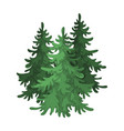 canadian spruce canada single icon in cartoon vector image