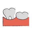 healthy human teeths vector image