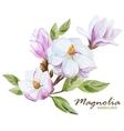 Magnolia set vector image