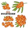 Sea Buckthorn Set vector image