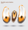 Beautiful feathers vector image
