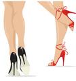 Sexy legs vector image