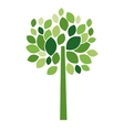 Tree plant with leaves design vector image