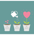 Heart seed watering can love plant Growth concept vector image